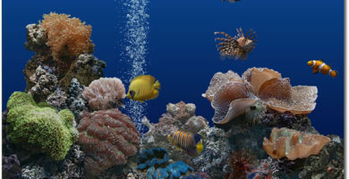 Marine Aquarium 3.3 de Order N Development